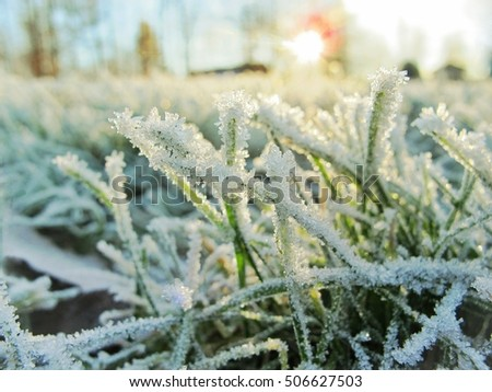 sunny winter landscape with the snow and ice crystals on th grass