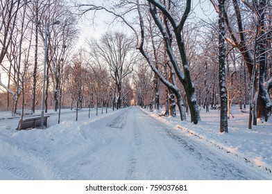 Sunny winter morning with snow-covered trees in the park after night with blizzard. Beautiful natural background.