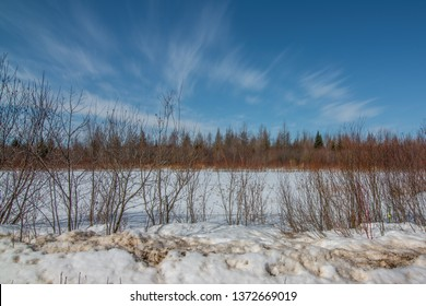 Sunny winter's day in the Sax-Zim Bog with snow, branches from shrubs, forest, and vivid blue skies