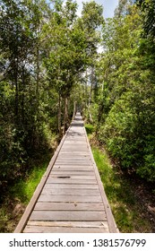 Sunny wooden trail in the jungle on the way to Camp Leakey, the most famous feeding station for Orangutans inside Tanjung Puting National Park, Kumai, Borneo, Indonesia