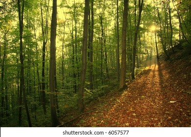 sunrays in autumn forest