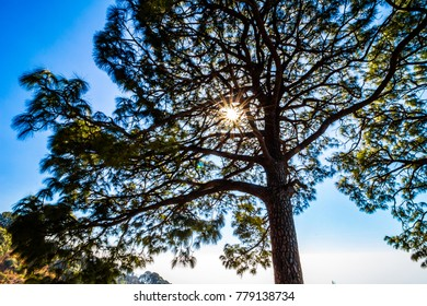 Sunrays captured through the branches of tree in the clear bright sky of Kasauli, Himachal Pradesh, India.