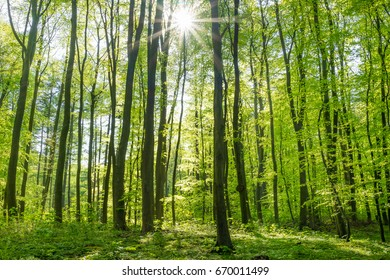Sunrays in a forest