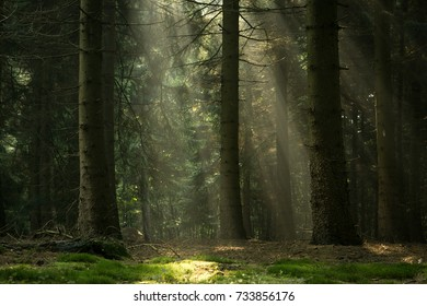 Sun-rays in the forest