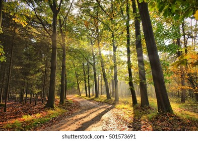 Sunrays of light in autumn forest with path and trees with colourful leaves.