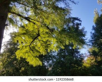 sunrays on leaves fairytale light green