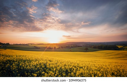 Sunrays over blooming yellow rapeseed field at spring. Countryside fields of Shropshire in United Kingdom