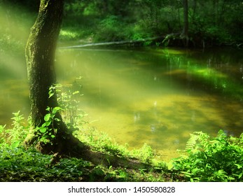 Sunrays over river in summer forest Landscape with lonely tree, transparent light and water. Golden sand on bottom of lake
