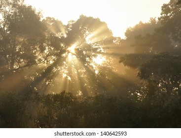 Sunrays penetrate through the trees