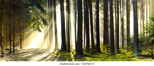SUNRAYS SEEN THROUGH THE TREE TRUNKS, FOREST PATH, BEAUTY OF NATURE, MORNING IN THE WOODS