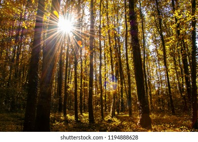 Sunrays shining through a beautiful forest during autumn