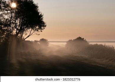 sunrays shining through dense morning mist