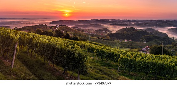 Sunrise above wineyard in Haloze region in Slovenia. Haloze region is wine country.