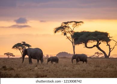 Sunrise African Elephant Family