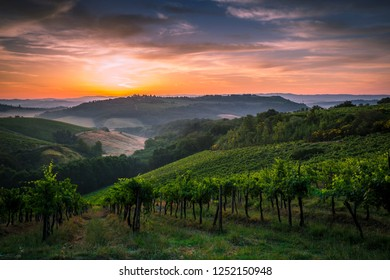 Sunrise among the vineyards of the beautiful Val d'Elsa in Tuscany
