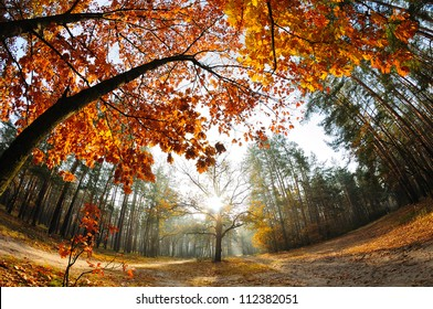 Sunrise in the autumn forest captures with a fish-eye lens