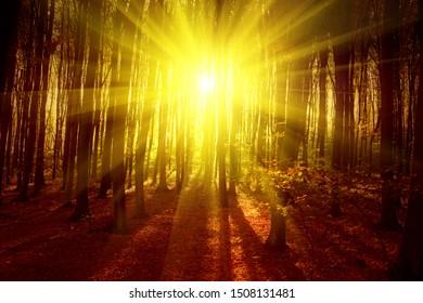 Sunrise in autumn forest. Nature image.