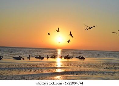 Sunrise at the Baltic Sea, flying gulls, floating swans
