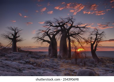 Sunrise with Baobab trees in foreground at LeKubu island, Botswana.