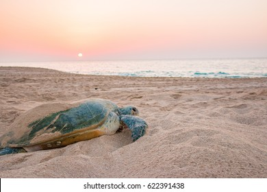 Sunrise at the beach on Raz al Jinz Turtle Reserve in Sur, with people silhouetted against the light; Sultanate of Oman