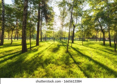 Sunrise beam in the beautiful summer park. Green nature landscape