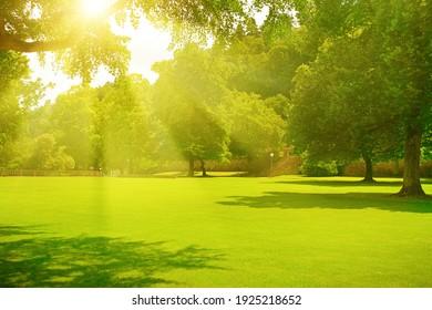 Sunrise beam in the beautiful summer park