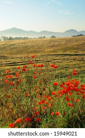Sunrise in beauty landscape with of red poppy-seed in front