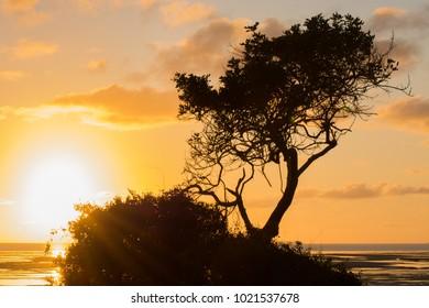 Sunrise behind bushes