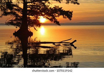 Sunrise behind cypress tree - Reelfoot Lake State Park, Tennessee