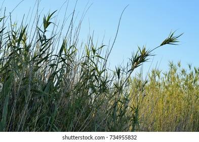 sunrise behind desert reeds