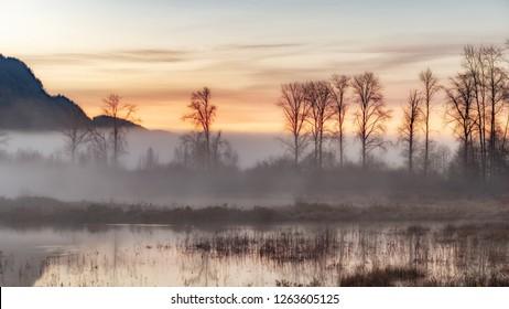 Sunrise behind the fog at Pitt-Addington Marsh.