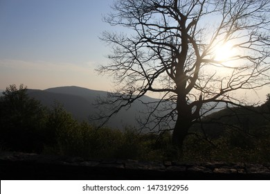 the sunrise behind a tree in the mountains of Virginia