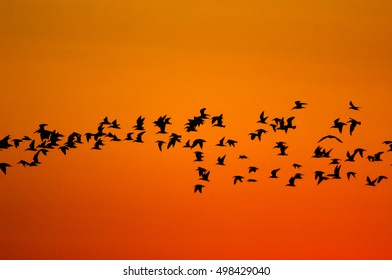 Sunrise Bird Flock on Orange Sky