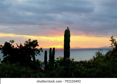 Sunrise with bird on cactus, Baja Mexico