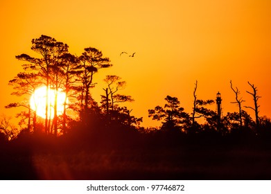 Sunrise, Birds, and the Cape Charles Lighthouse