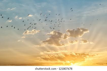 Sunrise with birds flying