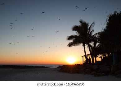 Sunrise with birds in sky and silhouetted palm trees at Snapper Rocks, Coolangatta, Australia