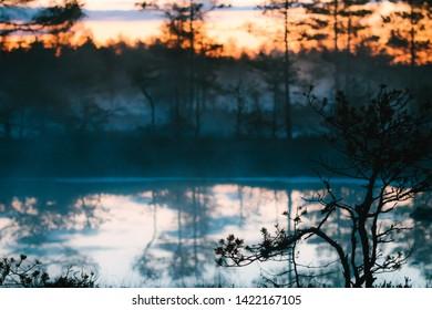 Sunrise in the bog, Estonian marsh, Viru raba landscape.