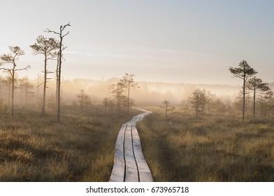 Sunrise Bog  & Fog (Estonian Meenokunno bog, swamps)