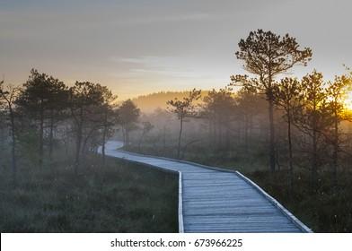 Sunrise Bog  & Fog (Estonian bog, swamps)