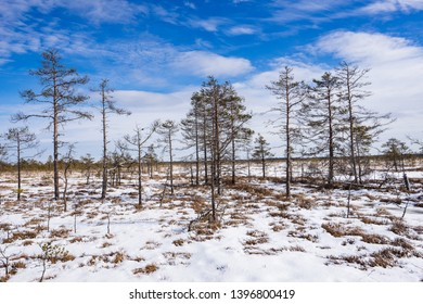 Sunrise in the bog. Icy cold marsh. Frosty ground. Swamp lake and nature. Freeze temperatures in moor. Blue fen. Muskeg natural environment. Sediment trees and frozen water.