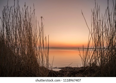 Sunrise by a lake in the sunrise with tall rushes by the shore