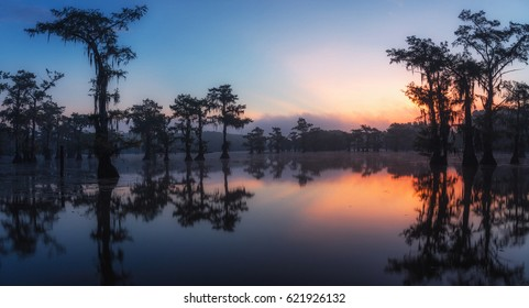 Sunrise at Caddo Lake. A classic bayou swamp scene of the American South featuring bald cypress trees reflecting on murky water in Caddo Lake, Texas, USA