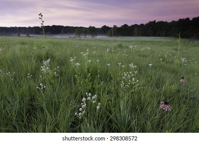 Sunrise at Churchill Prairie Nature Preserve, where coneflower, rattlesnake master, wild quinine and compass plant grow among the native prairie grasses.  DuPage County, Illinois.