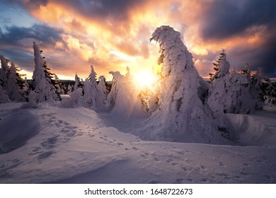 Sunrise with clouds and deep snow. Trees carry a heavy snow load