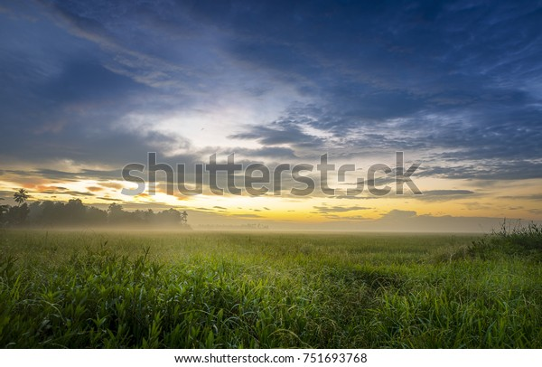 Sunrise with cloudy skies over a rice paddy field in Kerala, India