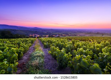 Sunrise is coming over vineyards of Beaujolais and Salles Arbuissonnas village, France