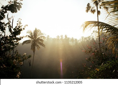 Sunrise coming through palm trees on a misty morning