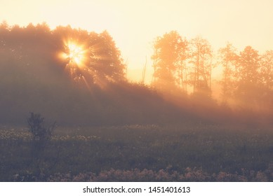 Sunrise in the country. Sun shining through a tree. Foggy summer morning. Background for travel pages