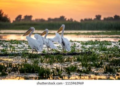 Sunrise in the Danube Delta with Pelican birds colony